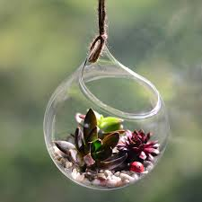 hanging glass orb succulent terrarium kit by dingading terrariums