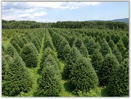 northeastern pennsylvania christmas tree farms choose and cut
