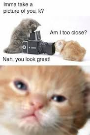 Cute Animals Memes - top 30 funny animal memes and quotes quotes and humor
