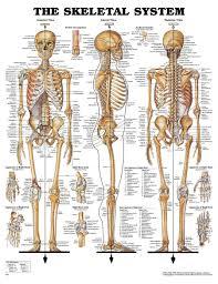 Human Anatomy Physiology Pdf Tag Name Of Bones In Human Body Pdf Archives Human Anatomy Body