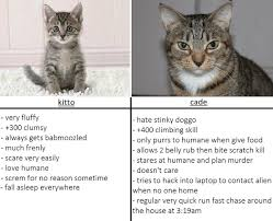 Cat Alien Meme - small cat vs big ol cade memes