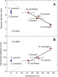morphometry of retinal vasculature in antarctic fishes is