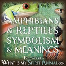 spirit totem u0026 power animal meanings