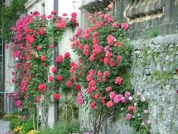 immagini di giardini fioriti primavera nei parchi pi禮 belli d italia tgcom24 foto 2
