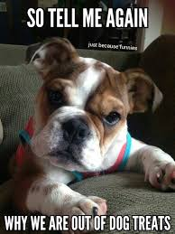 Baby Animal Memes - pin by diane bleyer on best bulldogs pinterest dog animal and