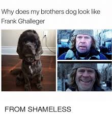 Shameless Meme - why does my brothers dog look like frank ghalleger from shameless