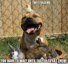 Cute Easter Meme - easter pitbull