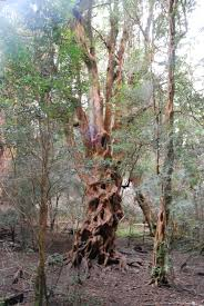 cool trees walking in the rain u2013 abroad and away