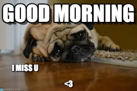 Good Morning Beautiful Meme - cute funny good morning beautiful memes for your loved ones
