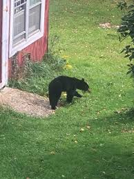 bear cub with no lower jaw album on imgur