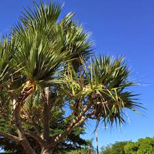 Pom Pom Trees Palm Tree Scavenger Hunt A Walk Around The Block Twitchetts