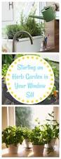 herb pots for windowsill how to start growing an herb garden in your window sill