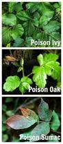 Best Way To Get Rid Of Mosquitoes In Your Backyard 7 Ways To Keep Ticks Out Of Your Yard Naturally Yards Gardens