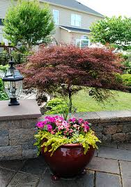 Garden Pots Ideas 8 Great Ideas For Backyard Landscaping The Graphics