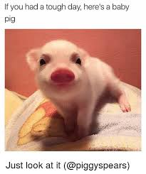 Funny Pig Memes - 25 best memes about baby pig baby pig memes