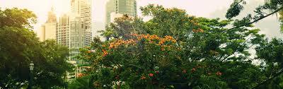 Botanic Gardens Brisbane City Hotels Near City Botanic Gardens Brisbane Book With Accorhotels