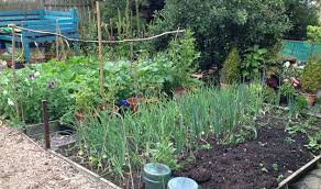 Garden Allotment Ideas Welcome To The Jungle The Garden Has Taken Dig The Outside