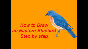 how to draw an eastern bluebird step by step youtube