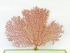dried sea fans for sale gold sea fan photography for sale https society6 com product sea