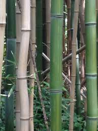 Design Your Own Apartment Bamboo House Tea Symphony All Glossy Outside Loversiq
