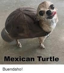 Turtle Memes - mexican turtle buendaho meme on me me