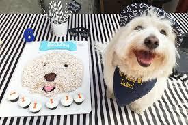 dog birthday the best new way to waste money