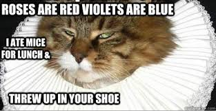 Poetry Meme - poetry cat sez alt lit dads