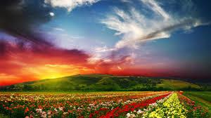 wallpaper india 5k 4k wallpaper valley of flowers meadows