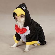 Funny Animal Halloween Costumes 35 Halloween Costumes Party Ideas Images