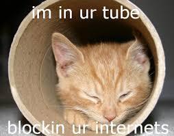 Tube Meme - i m in ur tube cat meme cat planet cat planet