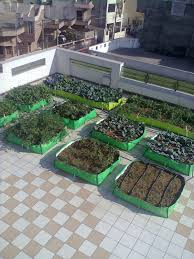 terrace gardening archives fresh life india shelf life