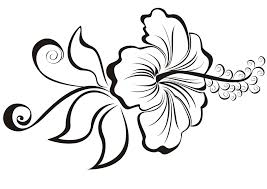 hibiscus flower drawing simple hibiscus flower drawing the best