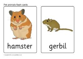 printable animal flash cards sparklebox