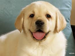 Wallpaper Dogs Cute Dogs Wallpapers Wallpapersafari