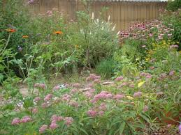buy pre planned gardens at michigan bulb regarding butterfly