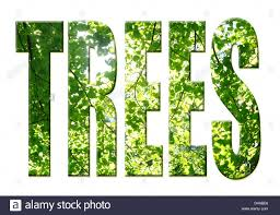 digital composition tree word trees stock photo royalty free