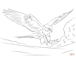 peregrine falcon coloring page free printable coloring pages