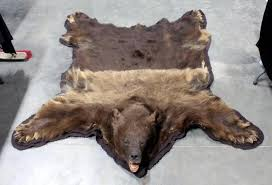 genuine bear skin rug with mounted head claws and felt border