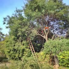 tree service tree removal stump portland oregon