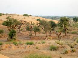 thar desert animals one night safari in the thar desert the path she took