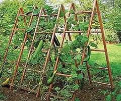 trellis for cucumbers trellises and support structures