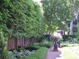 Best Trees For Backyard by Triyae Com U003d Backyard Trees For Privacy Various Design