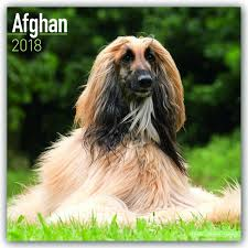 afghan hound afghan calendar dog breed calendars 2017 2018 wall calendars