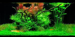 Aquascape Design Understanding Dutch Aquascaping Style The Aquarium Guide