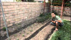 Garden Tips And Ideas Easy Garden Tips And Ideas For Growing Tomatoes From The