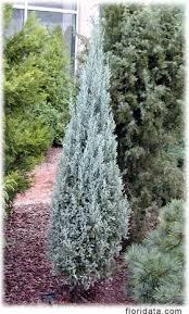 unique tree seeds