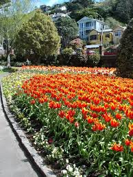 wellington botanical gardens tulips in the botanical gardens wellington mapio net