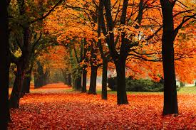 Autumn Decorations For The Home Fall Decorations For Outside The Home Http Www Medicalbag Com