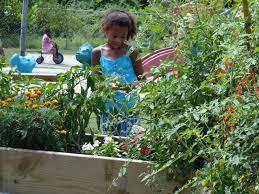 growing tomatoes in preschool gardens natural learning initiative