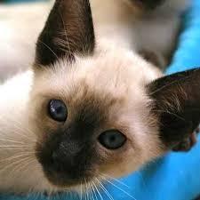 25 kitten sale ideas cute kittens